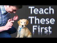 3 Easy Things To Teach Your New Puppy!How to train a puppy!Enter code when you check out to receive off of your first autoship order. Just choose your dog Dog Training Techniques, Dog Training Videos, Training Your Puppy, Potty Training, Training Tips, Leash Training, Crate Training, Training Classes, Training Schedule