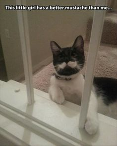 Funny animals, cat with mustache