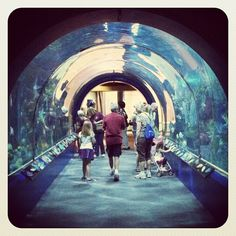 Take a streetcar to the aquarium and beat the afternoon crowd.