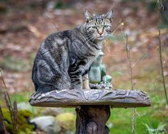 Waiting in the Bird Bath by Mikell Herrick on 500px.
