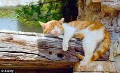 Cat nap in Paxos, Greece Cute Cats And Kittens, I Love Cats, Kittens Cutest, White Kittens, Kitten Gif, Cat Gif, Taylor Swift Cat, Red Cat, Orange Cats