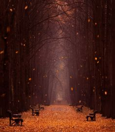 IF THIS IS REAL TAKE ME THERE!!!!!!!!! Falling Leaves Minsk Botanical Garden, Belarus, by Vlad Sokolov