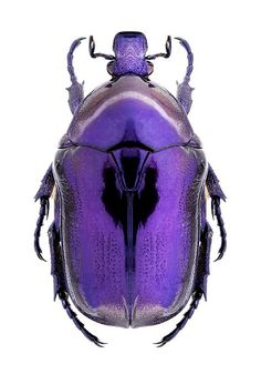 Protaetia mirifica hip hop instrumentals updated daily => www. Beetle Insect, Beetle Bug, Insect Art, Cool Insects, Bugs And Insects, Insect Photos, Cool Bugs, Carapace, Bug Art