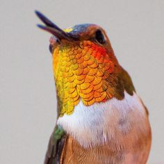 This Instagrammer Captures The Tiny Beauty Of Hummingbirds In Her Backyard | Bored Panda