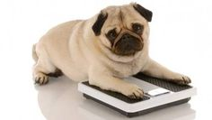 Six vet-approved tips for slimmer, trimmer, healthier dogs and cats.