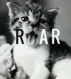 cute kitten, ROAR