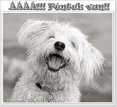 HURRÁ PÉNTEK VAN! - Legyen vidám, szép napotok! :) - alliteracio oldala