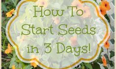 How to Grow seed in just 3 days