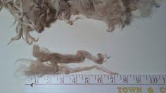 Suri Alpaca Locks Natural White Unwashed 6-8 by BreezyRidgeAlpacas