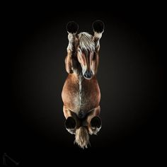 Photographer Andrius Burba is back with more incredible animal photography. Continuing his Underlook series, now he's shot the underside of horses. Equine Photography, Photography Projects, Animal Photography, Amazing Photography, Photography 2017, Conceptual Photography, Photo Animaliere, Photo Chat, Take Better Photos