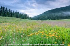 Misty Morning in Washington Gulch - Crested Butte - #mountains #flower #landscape