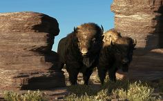 'Buffalo Guard' #digital #art #painting by Daniel Eskridg