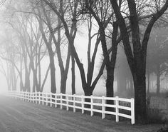 This is a melancholy White Fence... you can just see it disappearing into the morning fog.  www.whitefence.com