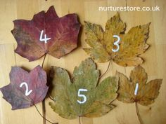 Love this idea to paint on some numbers onto leaves for chn to order or place that many conkers on etc