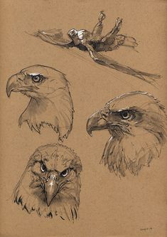 eagle, Floris van der Peet on ArtStation at Bald eagle, Floris van der Peet on ArtStation at . -Bald eagle, Floris van der Peet on ArtStation at . Bird Drawings, Animal Drawings, Pencil Drawings, Animal Sketches, Drawing Sketches, Drawing Ideas, Eagle Drawing, Arte Sketchbook, Toned Paper