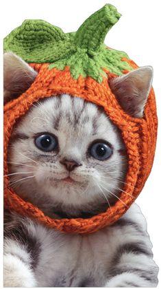 Kitten Knit Pumpkin Hat Cute Cat Little Big Funny Halloween Card by Avanti Press Dog Sweater Pattern, Crochet Dog Sweater, Cute Kittens, Cats And Kittens, Cats In Hats, Yorkie, Cat Sweaters, Pet Costumes, Kitten Costumes