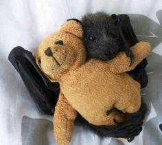 Baby orphan bat and snuggly bear plushie