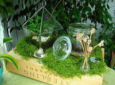 Создать мини сад флорариум своими руками из подручных материалов, избежать типичных ошибок в декорировании миниатюрного сада, подбор растений и уход, фото