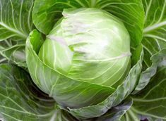 Did you know that intake of cabbage helps to fight obesity and lose weight effectively? Click to know more!