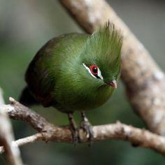 unusual looking bird