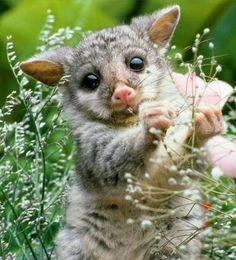 These baby animals are the cutest especially the baby wombat and the baby otter Amazing Animals, Animals Beautiful, Beautiful Images, Cute Creatures, Beautiful Creatures, Nature Animals, Animals And Pets, Rainforest Animals, Small Animals