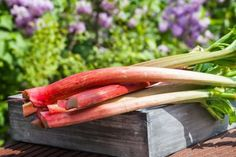Rhubarb Wine Recipe