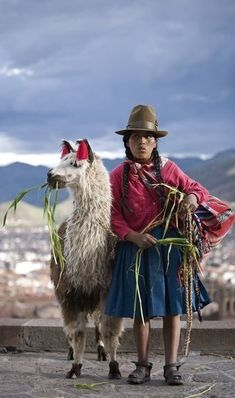 Animals, The larger beasts were used as transportation cargo on steep trails along the Andes