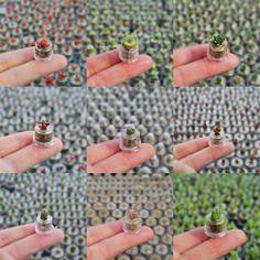 새싹부터 키워보세요!   #다육새싹 #선인장 #새싹화분 #새싹분재 #미니화분 #마음화분 #cactus #bonsai #succulents #miniplant #emotipot