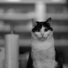 Black&White. うみはなにも変わらないね  #blackandwhite  #モノクロ #うみ #猫 #愛猫 #cat #ソニー #sony #α7rii  #カメラ好きな人と繋がりたい  #写真好きな人と繋がりたい #ファインダー越しの私の世界
