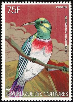 Anjouan Sunbird stamps - mainly images - gallery format