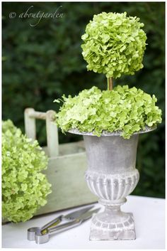 How To Make A Hydrangea Topiary - info on using fresh hydrangeas that will dry as they are in the arrangement.