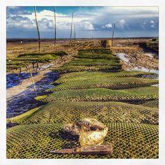 Les huîtres du bassin d'Arcachon #tourisme #campingcar Aquitaine, Bordeaux, Belle France, Saint Emilion, Cap Ferret, France Travel, Railroad Tracks, Coastal, Country Roads
