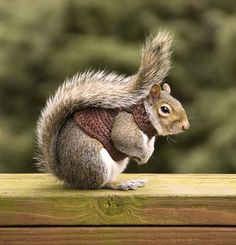 Funny Animal Pictures - View our collection of cute and funny pet videos and pics. New funny animal pictures and videos submitted daily. Funny Squirrel Pictures, Super Funny Pictures, Funny Animal Pictures, Cute Baby Animals, Funny Animals, Cute Squirrel, Squirrels, Pet Costumes, Dog Sweaters