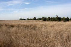 Saímos numa Quinta-feira de manhã, desta vez com um promissor dia de sol. Por volta das 9h começámos o nosso percurso junto ao Centro de Interpretação Ambiental, e pouco a pouco, fomos descobrindo a paisagem que os campos de arroz, sapais, juncais e caniçais nos proporcionam. Por todo o percurso existem placas informativas sobre os eco-sistemas e a biodiversidade do local, que de facto, são o que mais impressiona. Cegonhas, garças, peneireiros, piscos, felosas, cartaxos e muitos outros ...