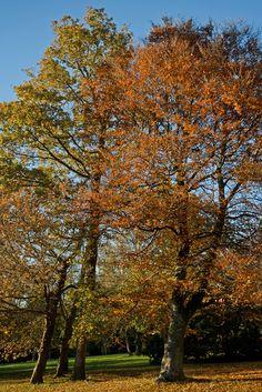 Amazing autumn colours in the Arboretum at West Dean Gardens.