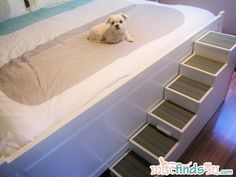The finished DIY Pet Stairs and Gracie, our Maltese.