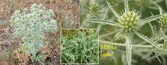 Byliny - Bylinky pro všechny Korn, Herbs, Plants, Herb, Plant, Planets, Medicinal Plants