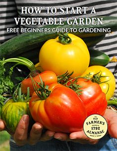 FREE Beginners Garden Guide>         </div>         <!-- Content Information -->         <div id=