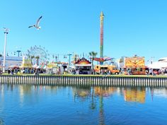 Learn what this local Tampanian experienced at the Florida State Fair. by Nikki J