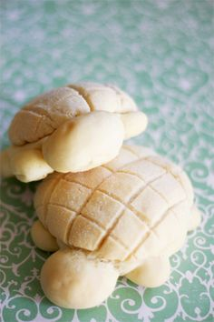 カメ のメロン パン Melon Pan Turtles Sweet bread with a sugar cookie like crust only this one is shaped like turtles so even better!
