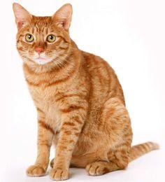Cat pic