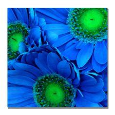 Amy Vangsgard 'Blue Gerber Daisies' Canvas Art   Overstock.com
