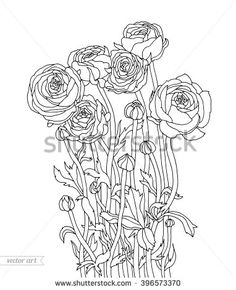 Gallery for ranunculus watercolor tattoo flower images for Buttercup flower coloring pages