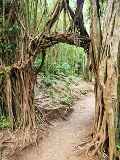 Natural arch at Manoa Falls, Oahu - Hawaii More