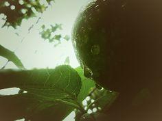 Drops - Peach- Nature