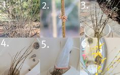 HOW-TO Force Branches to Bloom
