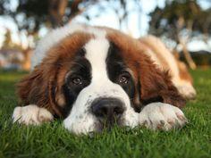 Tierfriedhof: Letzte Ruhestätte für den Hund – Foto: Shutterstock / Katrina Brown    www.einfachtierisch.de