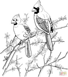 Two Red Cardinals coloring page | SuperColoring.com
