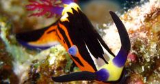 Fish - sweet photo