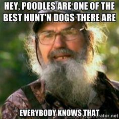 Poodles...show respect...VIVIAN